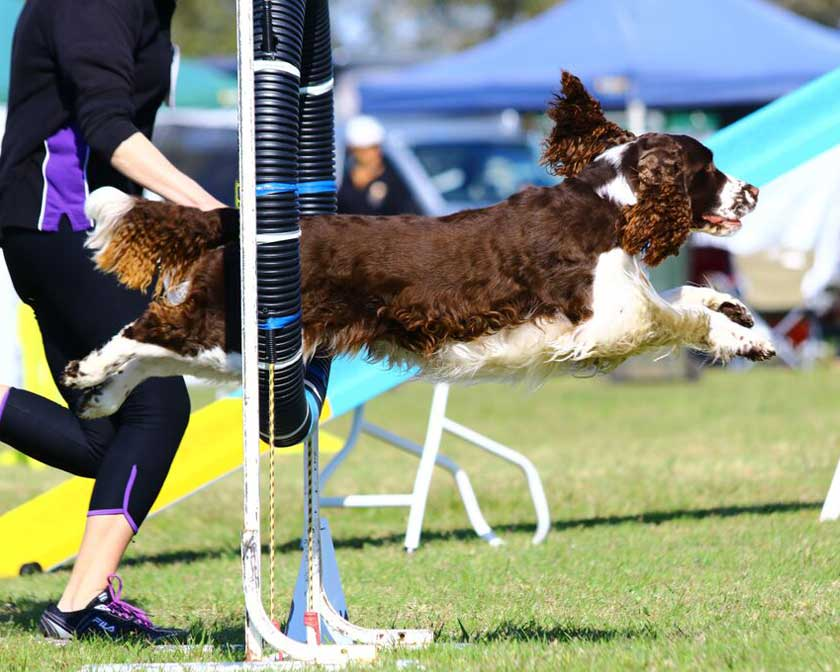 Dog Training Club Wollongong